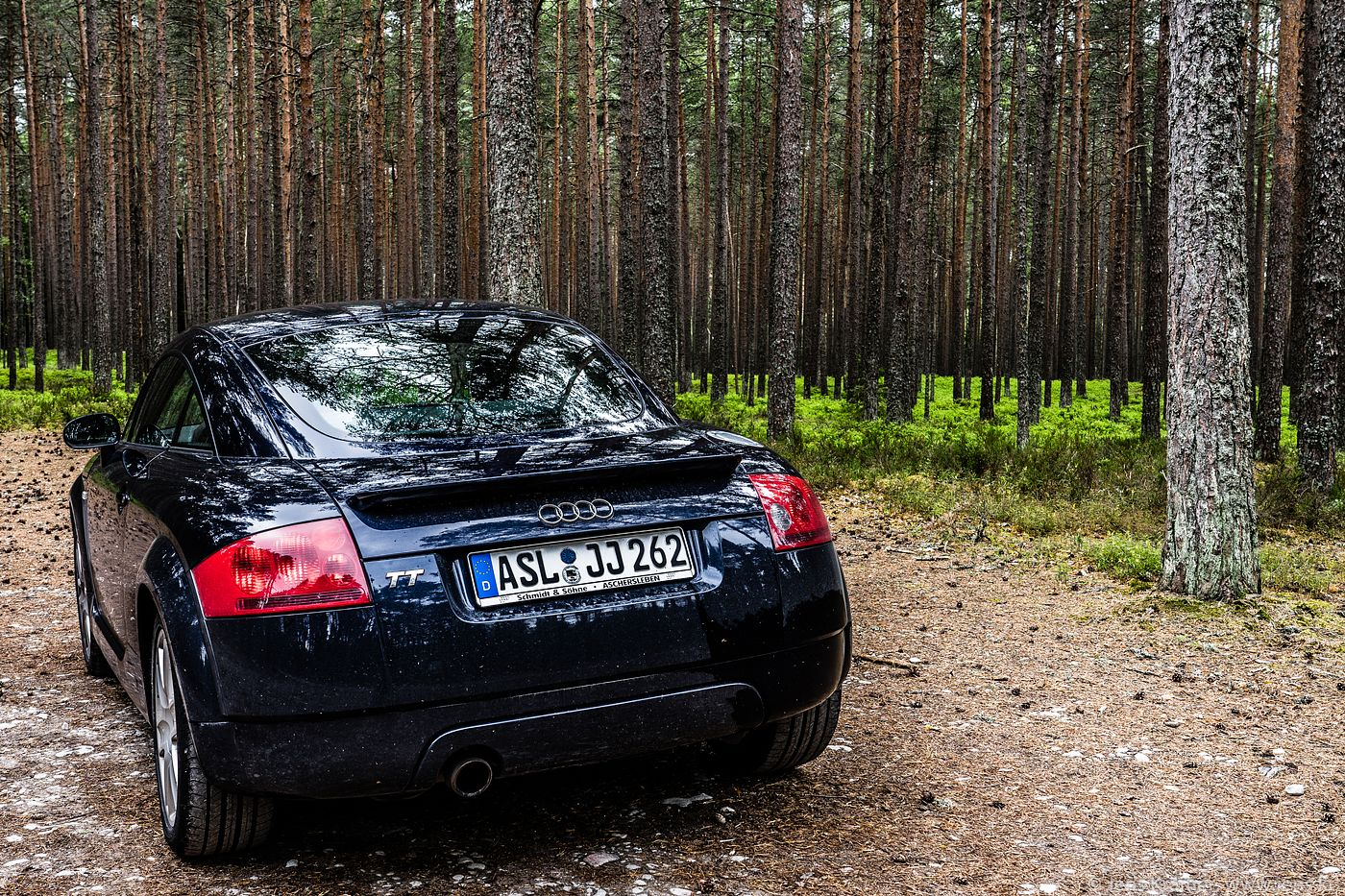TT in the Forest
