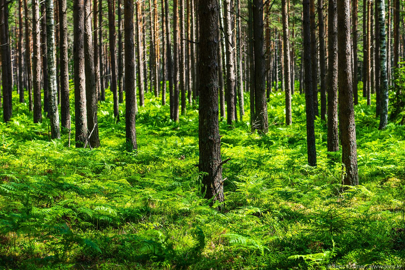 Forest on Hiiumaa