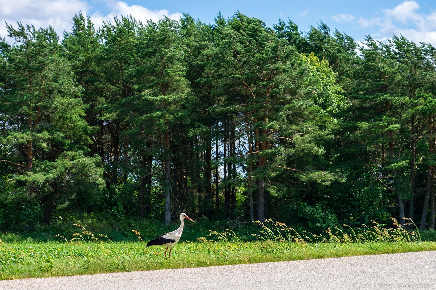 Storks are a common sight in rural Estonia